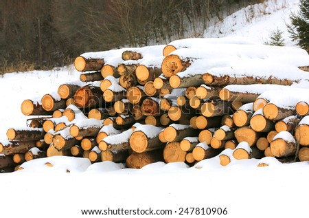 wooden logs under snow in forest  - stock photo