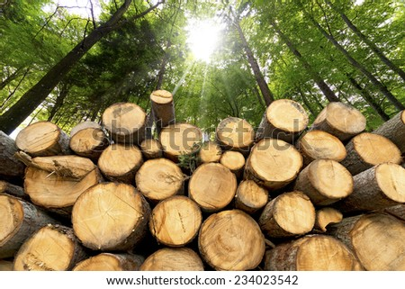 Wooden Logs with Forest on Background / Trunks of trees cut and stacked in the foreground, green forest in the background with sun rays - stock photo