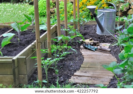wooden path in a vegetable patch with watering can