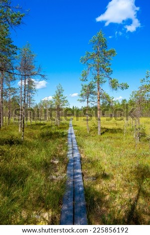 wooden path through the pine forest in the national park - stock photo