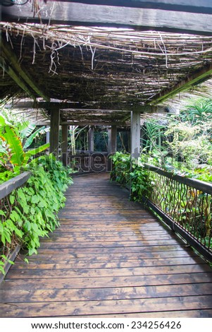 Wooden pathway in tropical rain forest. - stock photo