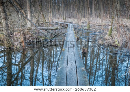 Wooden pathway leading through Weingarten bog, a small nature reserve close to Karlsruhe, Germany - stock photo