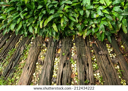 Wooden pathway near green fresh plant - stock photo