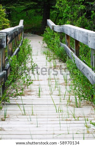Wooden pathway over a marsh in the mountains