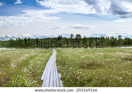 Wooden pathway to river bank between swamp, Karelia - stock photo