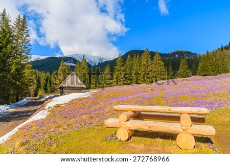 Wooden picnic table on meadow with blooming crocus flowers in Chocholowska valley, Tatra Mountains, Poland - stock photo