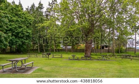 Wooden picnic tables in the forest on a green lawn. Saltwater State Park, Washington state - stock photo