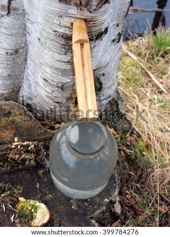 Wooden pipe for collecting birch sap top view. - stock photo