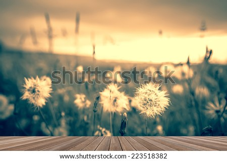 wooden plank platform on the prairie background with beautiful sunlight - stock photo