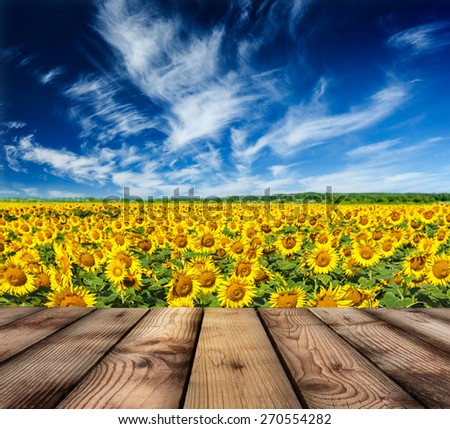 Wooden planks floor with idyllic scenic summer landscape - blooming sunflower field and blue sky - stock photo