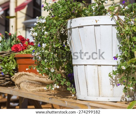 wooden planter with flowers - stock photo