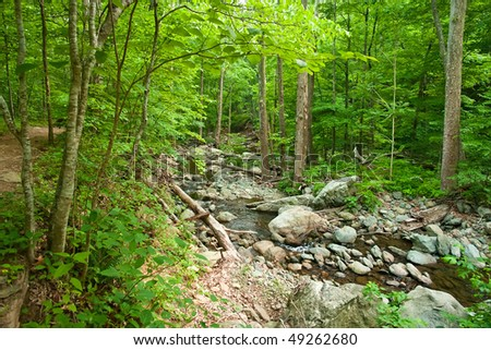 Wooden river in Shenandoah national park, VA, USA