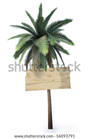 wooden signs hanging on the trunk of a palm. isolated on white. - stock photo