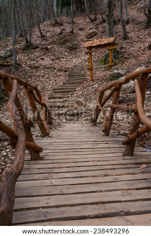 Wooden stairs cover a forest path