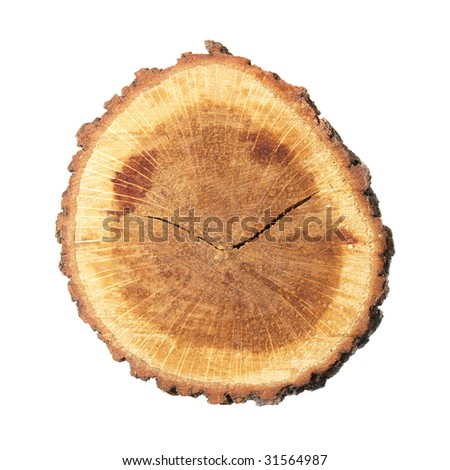 Wooden stump isolated on the white background. - stock photo