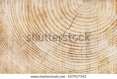 Wooden texture of a tree trunk - stock photo