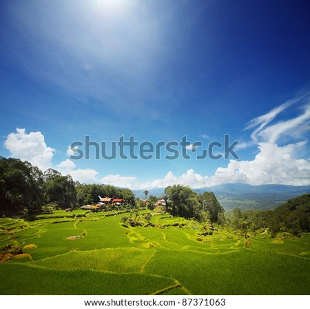 Wooden traditional Toraja's homes and green rice fields in mountains - stock photo