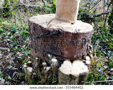 wooden tree stump cut down forest destruction - stock photo