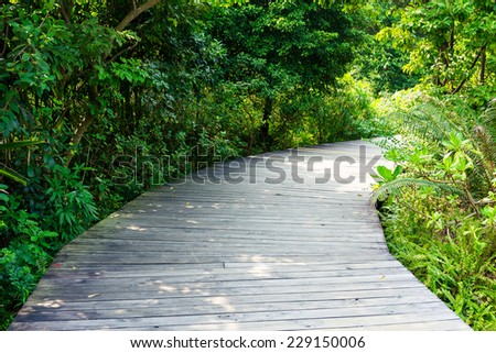 Wooden walk way  - stock photo