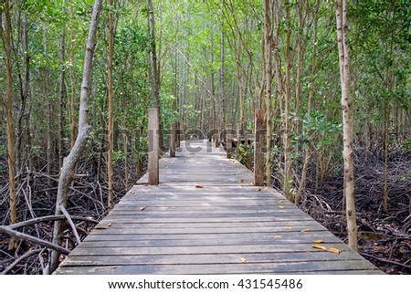 Wooden walkway bridge surrounded with mangrove tree in mangrove forest located at Rayong, Thailand. - stock photo