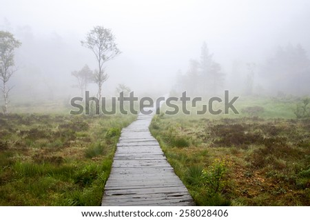 Wooden walkway in foggy forest - stock photo