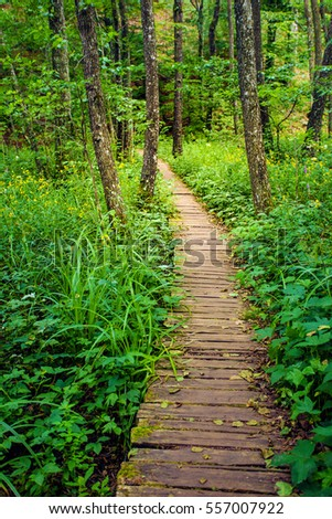 Wooden Walkway in Plitvice Lakes National Park, Croatia