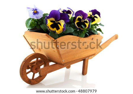 wooden wheelbarrow for the garden filled with Pansies - stock photo