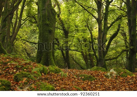 Woodland in Galway city suburbs in Connacht region of Ireland, Europe - stock photo