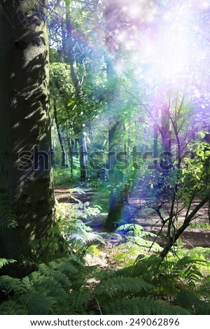 Woodland Nymph - Scene of deep woodland with thick tree trunk on left, vivid light in top right corner with sparkling light streaming downwards depicting supernatural energy - stock photo