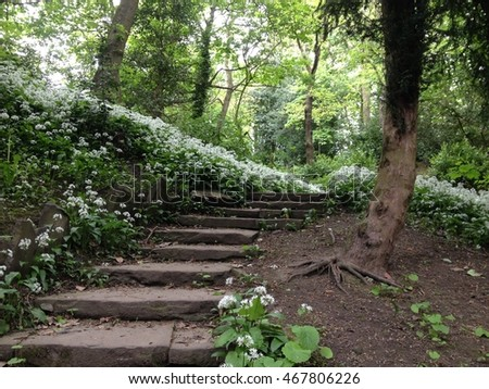 Woodland path with garlic plants growing