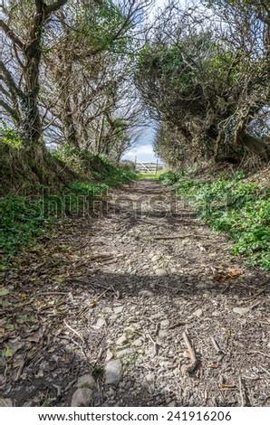 woodland pathway  - stock photo