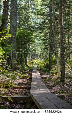 Woodland Pathway Through Forest along Wooden Walkway Foot Trail - stock photo