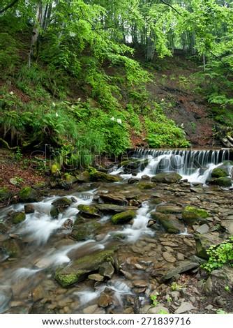 Woodland Stream in Sheffrey Wood, Ireland. - stock photo