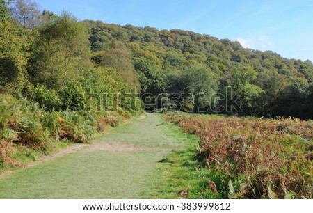 Woodland Valley next to the River Barle near Tarr Steps within Exmoor National Park, Somerset,England, UK - stock photo