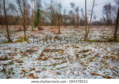 Woodland with a covering of snow - stock photo