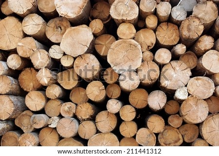Woodpile of cut Lumber for forestry industry - stock photo