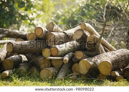 Woodpiles - stock photo