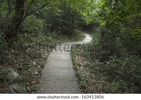 Woods trail - stock photo