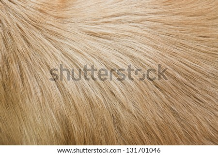 wool background - stock photo