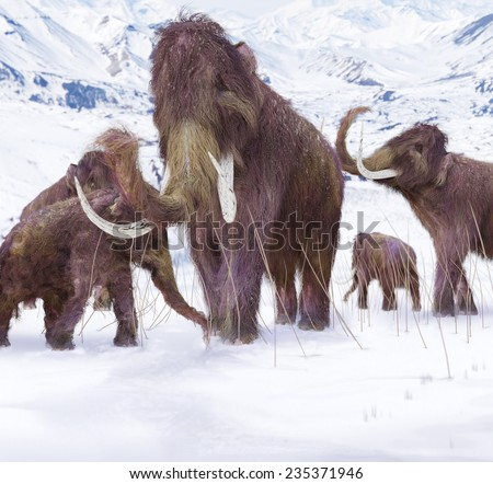 Woolly Mammoth Family - An illustration of a family of Woolly Mammoths grazing on what is left of the grasses as winter approaches in this ice age scene.  - stock photo