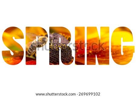 Word SPRING over wildlife. - stock photo