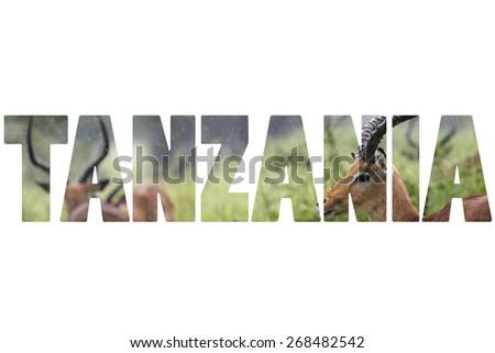 Word TANZANIA over wild animals. - stock photo