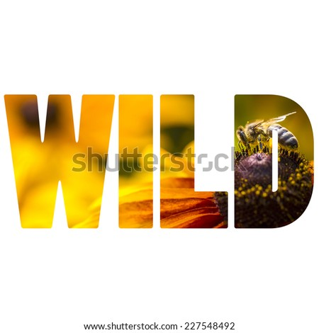 Word WILD Bee gathering nectar and spreading pollen.  - stock photo