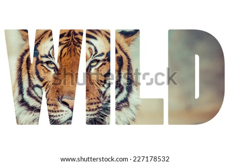 Word WILD Close-up of a Tigers face. - stock photo