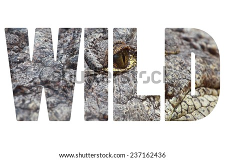 Word WILD over crocodile closeup. - stock photo