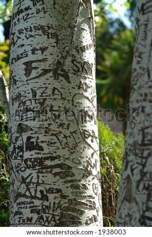 Words engraved on a tree in Generalife gardens from Alhambra, Granada, Spain - stock photo