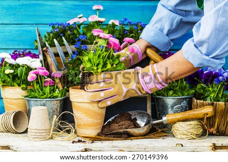 Work in the garden, planting pots - stock photo