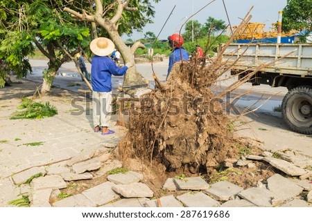 Worker cleans up fallen tree damaged on street by natural heavy wind storm in Hanoi  - stock photo
