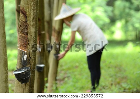 Worker People working and Tapped rubber tree with Cup - stock photo