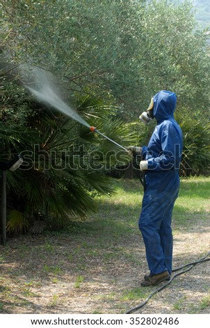 Worker sprays disinfectant on olive trees